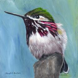 Art: Calliope Hummingbird by Artist Janet M Graham