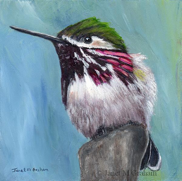 Art: Calliope Hummingbird by Artist Janet M Graham