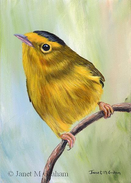 Art: Wilson's Warbler by Artist Janet M Graham