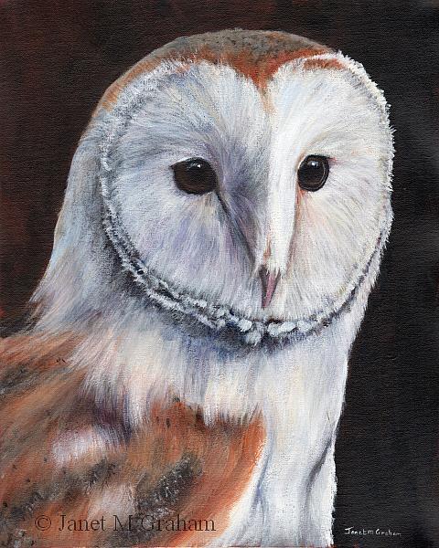 Art: Barn Owl by Artist Janet M Graham