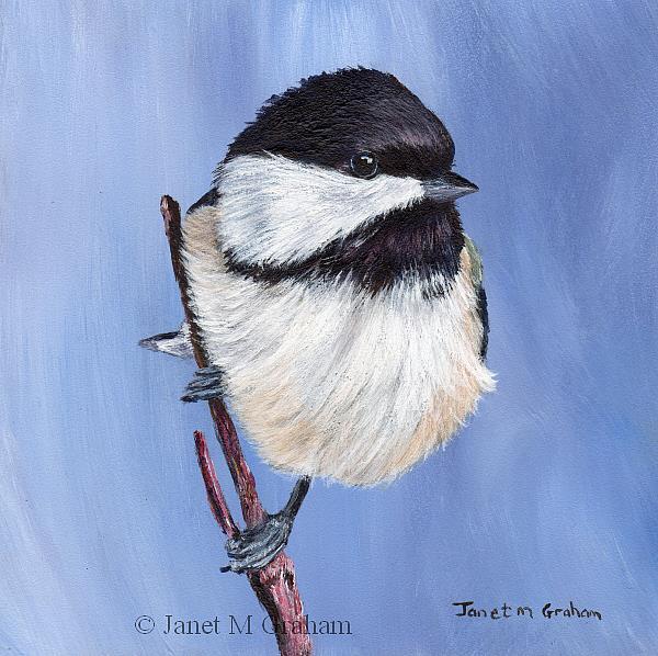 Art: Black Capped Chickadee No 2 by Artist Janet M Graham