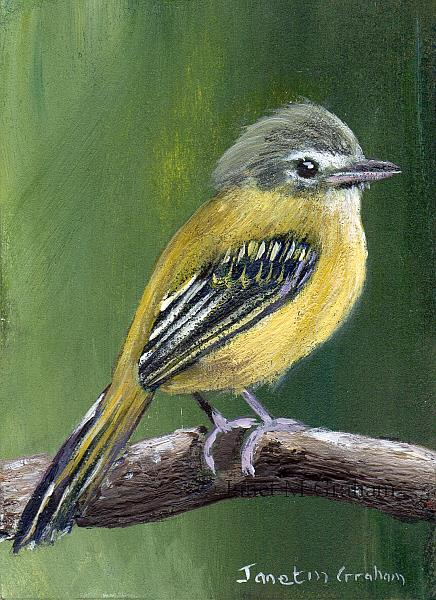 Art: Yellow Olive Flatbill ACEO by Artist Janet M Graham