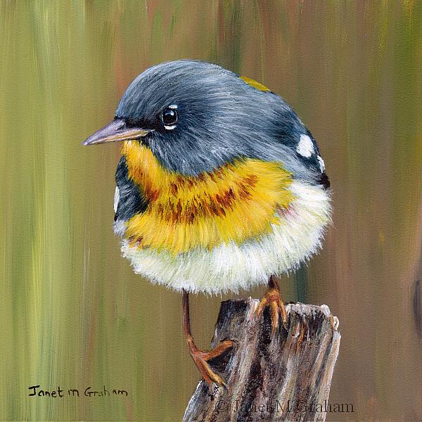 Art: Northern Parula by Artist Janet M Graham