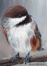 Art: Boreal Chickadee ACEO by Artist Janet M Graham