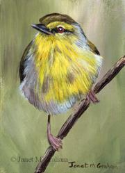 Art: Stripe Throated Jery ACEO by Artist Janet M Graham