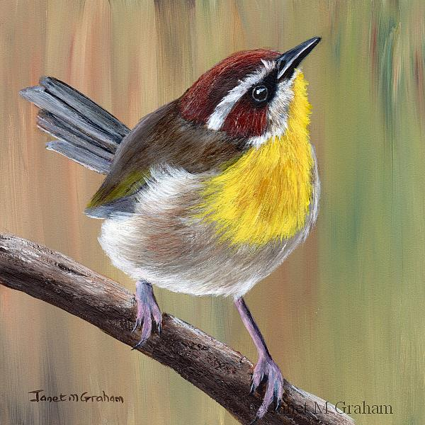Art: Rufous Capped Warbler by Artist Janet M Graham