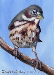 Art: Fox Sparrow ACEO by Artist Janet M Graham