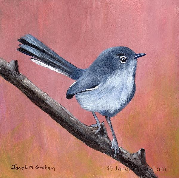 Art: Black Tailed Gnatcatcher by Artist Janet M Graham