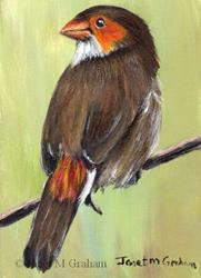 Art: Orange Cheeked Waxbill ACEO by Artist Janet M Graham