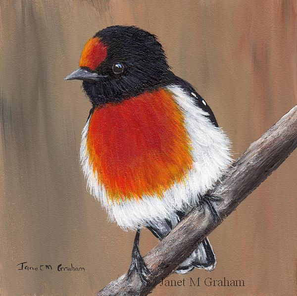 Art: Red Capped Robin by Artist Janet M Graham