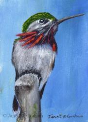 Art: Calliope Hummingbird ACEO by Artist Janet M Graham