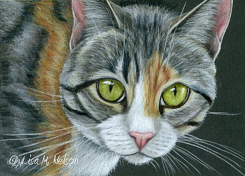 Art: Mixed Tabby Cat on Black by Artist Lisa M. Nelson