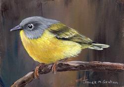 Art: Nashville Warbler No 2 ACEO by Artist Janet M Graham