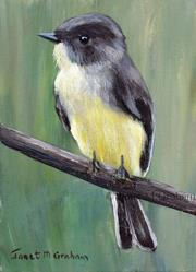 Art: Eastern Phoebe ACEO by Artist Janet M Graham