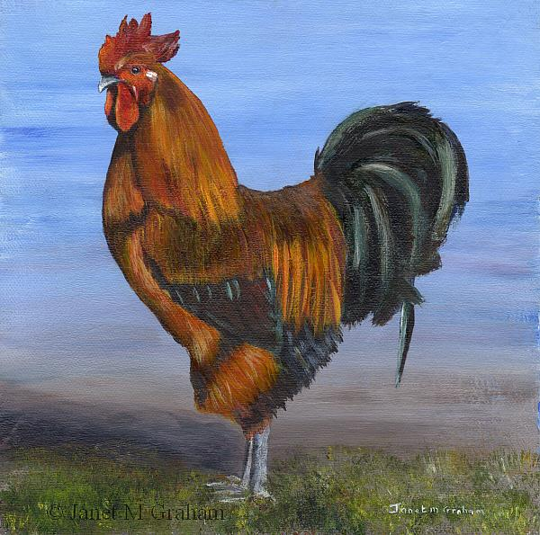 Art: Rooster by Artist Janet M Graham