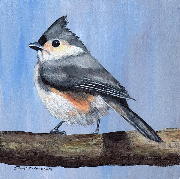 Art: Tufted Titmouse No 5 by Artist Janet M Graham