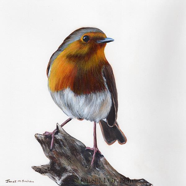 Art: Robin No 10 by Artist Janet M Graham