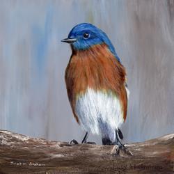 Art: Eastern Bluebird by Artist Janet M Graham