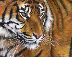 Art: Tiger by Artist Janet M Graham