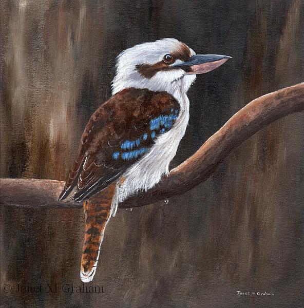Art: Laughing Kookaburra by Artist Janet M Graham