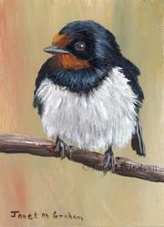 Art: Barn Swallow ACEO by Artist Janet M Graham