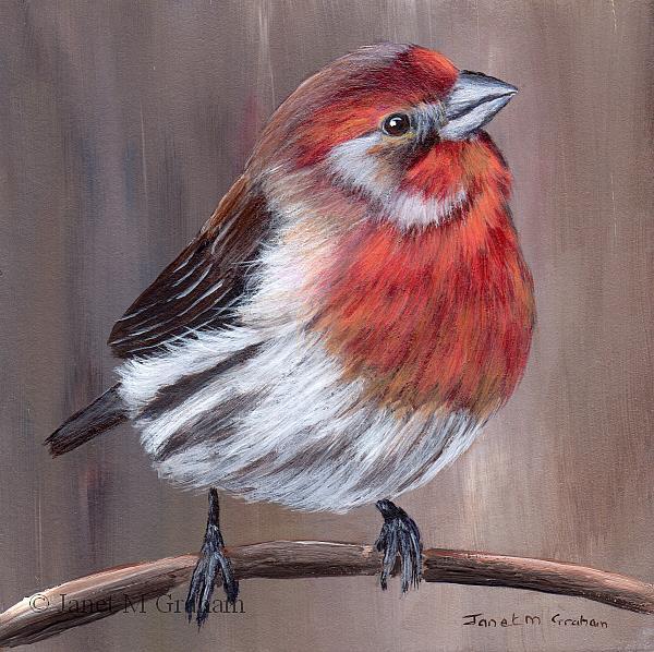 Art: House Finch by Artist Janet M Graham