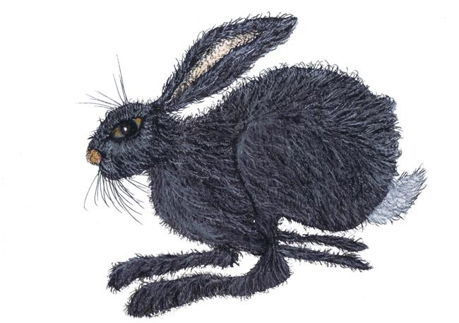 Art: HARE IN A HURRY! h3205 by Artist Dawn Barker