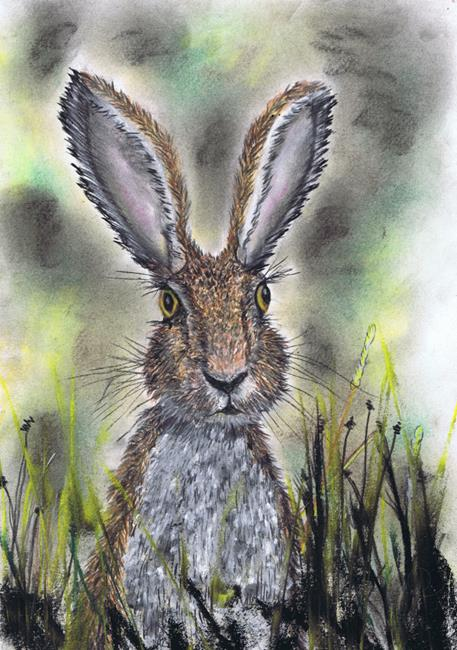Art: HARE IN GRASS h3206 by Artist Dawn Barker