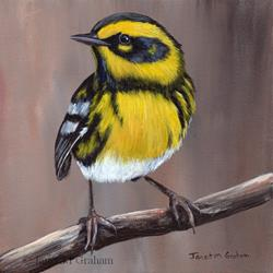 Art: Townsend's Warbler by Artist Janet M Graham