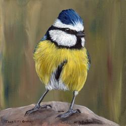 Art: Blue Tit No 3 by Artist Janet M Graham