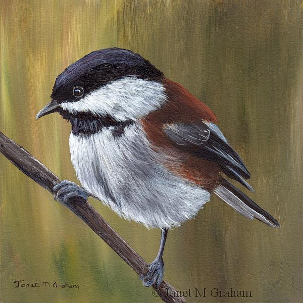 Art: Chestnut Backed Chickadee by Artist Janet M Graham