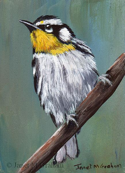 Art: Yellow Throated Warbler ACEO by Artist Janet M Graham