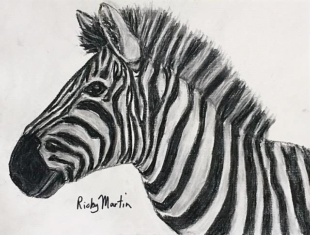 Art: Charcoal Sketch   Zebra by Artist Ulrike 'Ricky' Martin