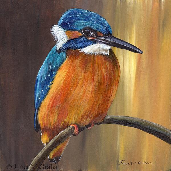 Art: Common Kingfisher by Artist Janet M Graham