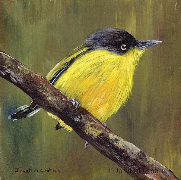 Art: Common Tody Flycatcher by Artist Janet M Graham