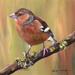 Art: Chaffinch by Artist Janet M Graham