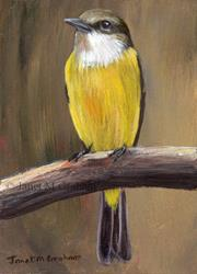 Art: Lemon Bellied Flycatcher ACEO by Artist Janet M Graham