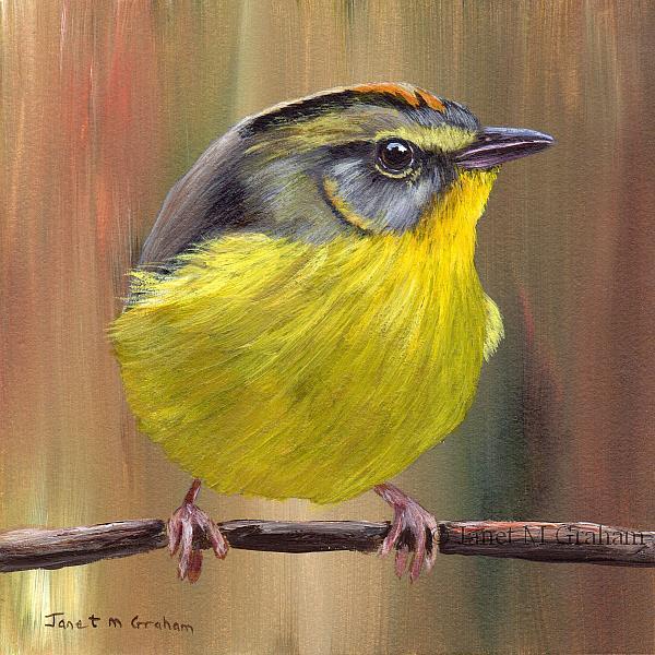 Art: Golden Crowned Warbler by Artist Janet M Graham