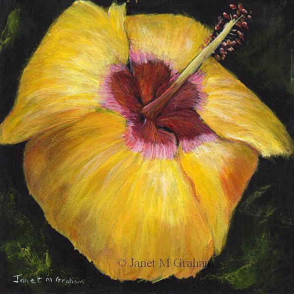 Art: Yellow Hibiscus by Artist Janet M Graham