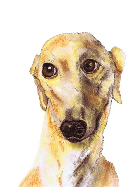 Art: GREYHOUND g215 by Artist Dawn Barker