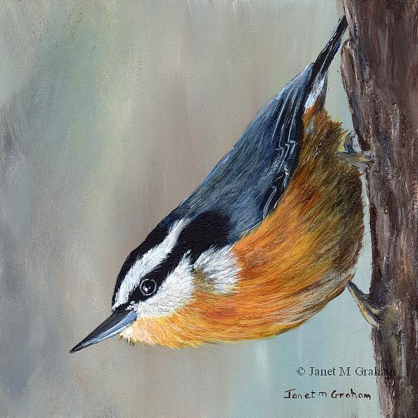 Art: Red Breasted Nuthatch by Artist Janet M Graham