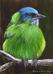 Art: Blue Dacnis ACEO by Artist Janet M Graham