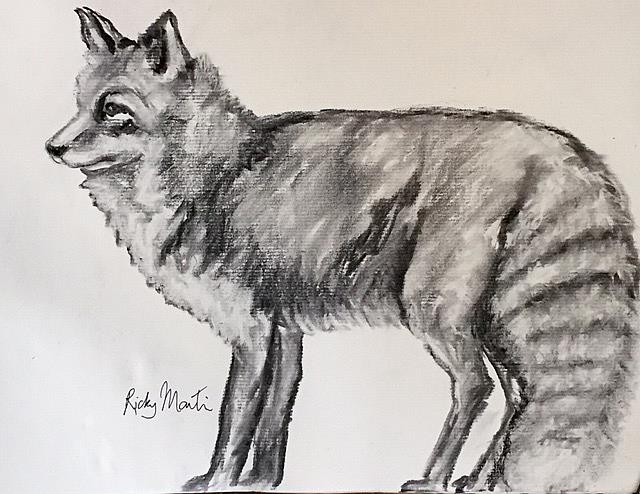 Art: Fox Sketch by Artist Ulrike 'Ricky' Martin