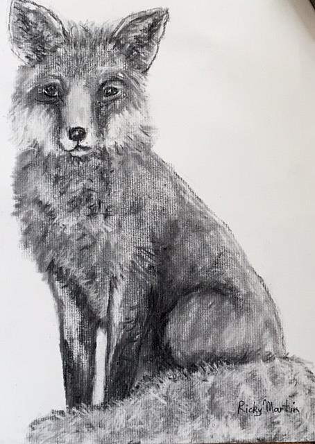 Art: Fox drawing by Artist Ulrike 'Ricky' Martin