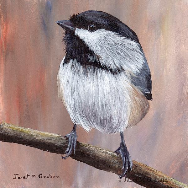 Art: Black Capped Chickadee No 3 by Artist Janet M Graham