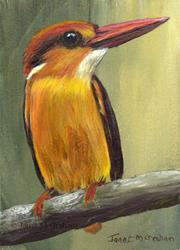 Art: Black Backed Kingfisher ACEO by Artist Janet M Graham