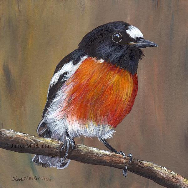 Art: Scarlet Robin No 2 by Artist Janet M Graham