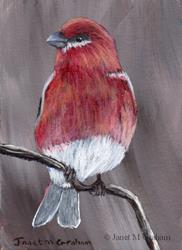 Art: Pine Grosbeak ACEO by Artist Janet M Graham