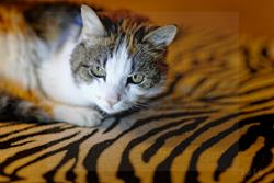 Art: ZEBRA CAT by Artist SINdustry CITY Productions LLC
