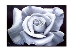 Art: WHITE ROSE by Artist Kate Challinor